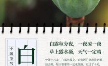 清新风二十四节气白露推广宣传H5模板缩略图