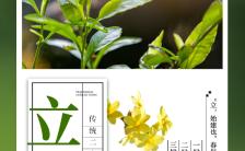 清新文艺风立春节气二十四节气宣传介绍H5模板缩略图
