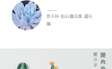 清新文艺多肉植物宣传长图缩略图